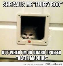 23-fluffy-boo-cat-meme | PMSLweb via Relatably.com