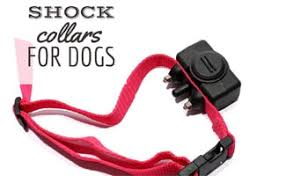 8 Things To Know Before Buying A Shock <b>Collar</b> – CanineJournal.com