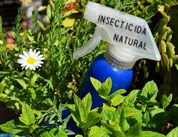 Resultado de imagen para AROMÁTICAS PARTE II Insecticidas naturales