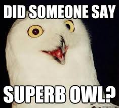Image result for superb owl meme