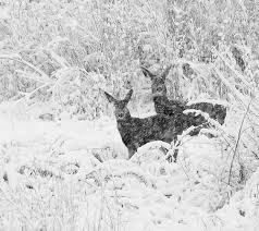 Image result for deer and snow in jerusalem