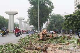 Kết quả hình ảnh cho chặt cây