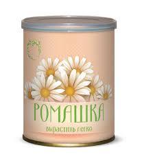 Цветок в банке <b>Ромашка</b> аптечная купить в Самаре