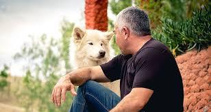What To Do If You're Bitten By A <b>Dog</b> | Cesar's Way