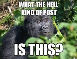 Wary Gorilla memes | quickmeme via Relatably.com