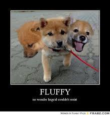 FLUFFY... - Three Headed Dog Meme Generator Posterizer via Relatably.com