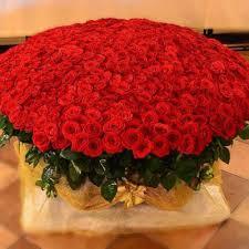 Купить <b>1001</b> розу в корзине в Москве с доставкой бесплатно