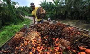 「棕櫚油」的圖片搜尋結果