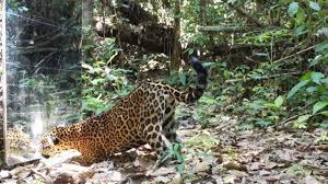 Rainforest <b>Mirror</b> Scares Passing <b>Wildlife</b> - YouTube