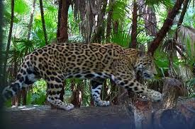 Image result for belize zoo