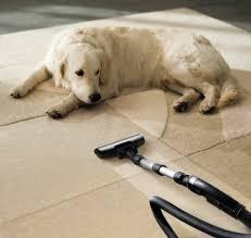 Carpet Cleaning in Algonac