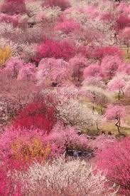 2436 Best Deby yu images   Planting flowers, Beautiful flowers ...