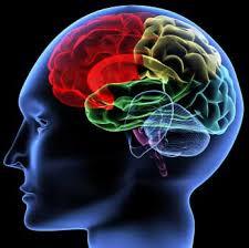 image - brain