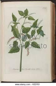 Pars Prima  Conspectus praelectionum ad usum auditorum  Rome  Universita Gregoriana            pp   paperback       One among many authors whose errors