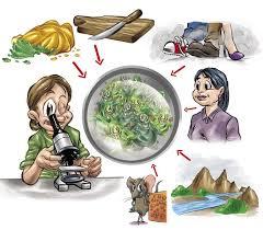 Resultado de imagem para imagens alimentos perigosos
