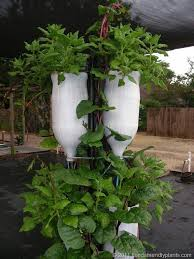 Small Picture 8 best Small vege garden ideas images on Pinterest Gardening