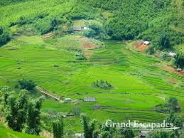 sapa rice terraces a photo essay of northern vietnam rice terraces near sapa in the summer north vietnam