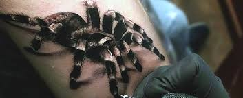 100 <b>Spider Tattoos</b> For Men - A Web Of Manly Designs