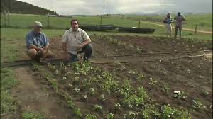 Small Picture Vegetable Garden Irrigation System YouTube