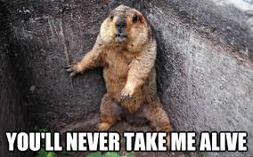 trapped groundhog memes | quickmeme via Relatably.com