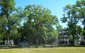 write an essay win this horse farm deadline is oct you can pretty and 35 acres