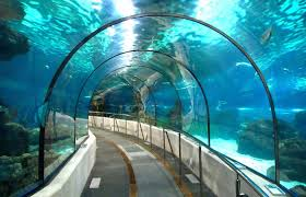 Image result for india's bullet train underwater