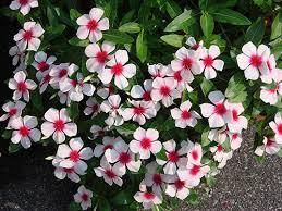 Resultado de imagem para flores planta