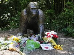 Image result for harambe gorilla images cincinnati