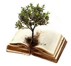 Resultado de imagem para Crescendo em Cristo e no amor