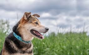 Lupine Pet - <b>Dog Collars</b>, <b>Leashes</b> & Pet Gear - Lifetime Guarantee!