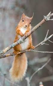 <b>squirrel feeders</b> | Silverback: Squirrel at Feeder | I Love SQUIRRELs ...