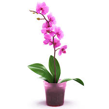 Image result for orchid flower