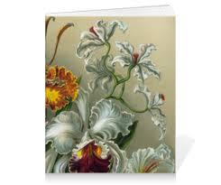 "Тетрадь на клею ""<b>Орхидеи</b> (Orchideae, Ernst Haeckel)"" #2296264 ..."