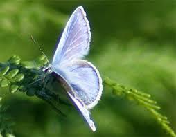 Butterfly Walk - Exmoor's Glorious Butterflies
