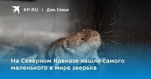 На Северном Кавказе нашли самого маленького в мире зверька