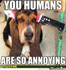 Annoyed Dog Is Annoyed by kognak - Meme Center via Relatably.com