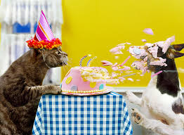 Image result for cartoon , cat blowing out candles