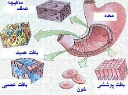 Image result for انواع بافت سلولی