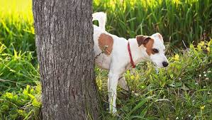 Housetraining <b>Adult Dogs</b>: Training Tips And Techniques - DogTime