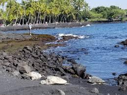 Punalu'u <b>Black</b> Sand beach (Pahala) - <b>2019</b> All You Need to Know ...