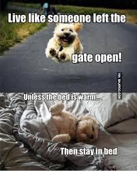 funny-dog-live-life-like – Bajiroo.com via Relatably.com