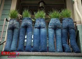 Bilderesultat for funny plants pictures