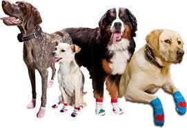 Tα εξαιρετικά πόδια των σκύλων !...