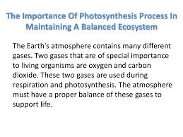 essay the importance of photosynthesis in maintaining a balanced        essay the importance of photosynthesis in maintaining a balanced ecosystem   image