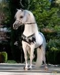 أجمل أحصنة images?q=tbn:ANd9GcR
