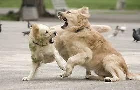 Στην Κύπρο έπαιξαν ξύλο με αφορμή σκυλοκαβγά!