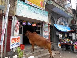 Image result for pictures cows eating on street india