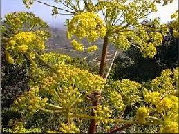 La flora del Parco del Sulcis - Sardegna - Italia
