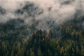 forest conservation essayessay on conservation of forest  essay meister  essay marketing     status