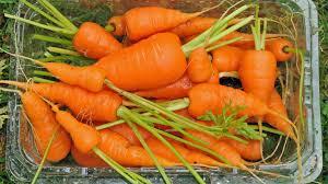 Do <b>Carrots</b> Really Help Your Vision? : The Salt : NPR